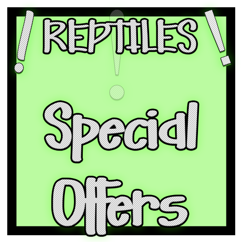 Reptile Clearance & Specials